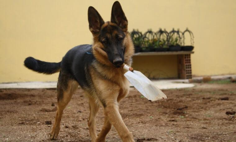 dog_clean_apisteuta